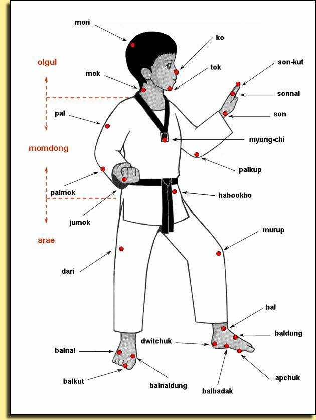 navn-på-kroppsdeler